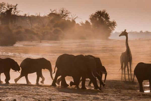 Richard Isaacman, Botswana Watering Hole, Watering Holes 2017